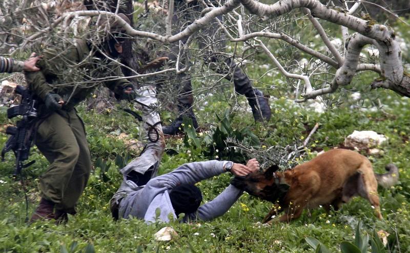 Israel setzt niederländische Hunde ein, um Palästinenser zu terrorisieren