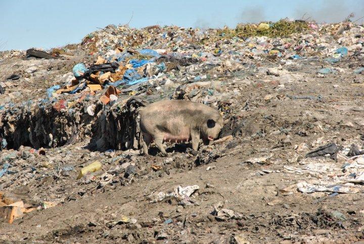En Albanie, le commerce lucratif des déchets étrangers