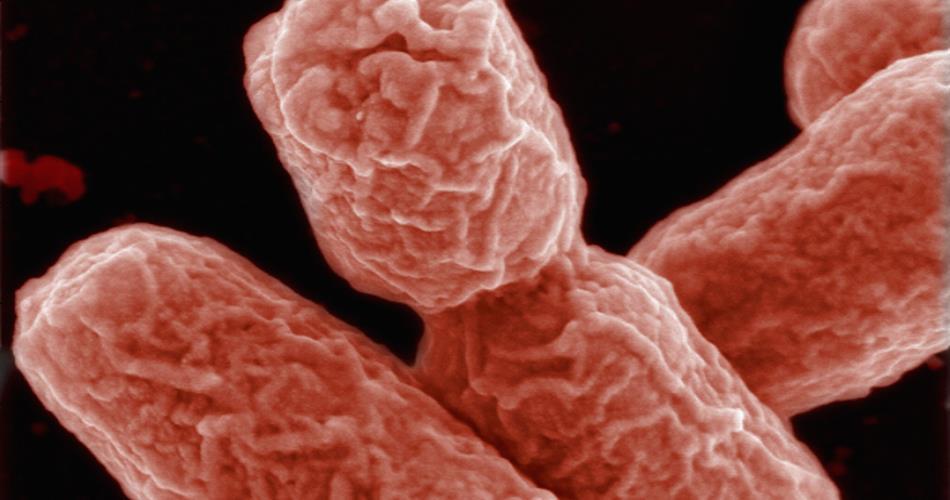 Antibiotici negli allevamenti, l'Italia è la regina degli abusi