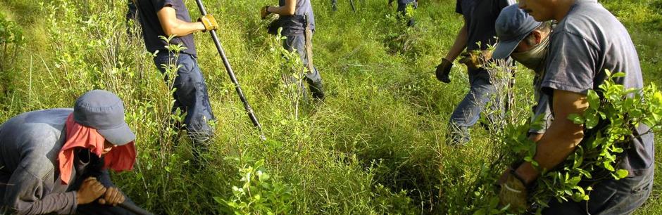 Colombia, il futuro sospeso dei cocaleros 'orfani' di Stato e Farc