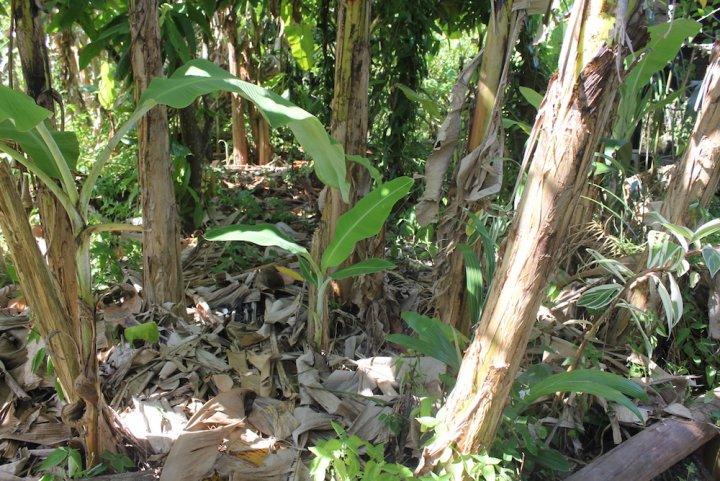 La crise en Guyane découle de sa dépendance alimentaire