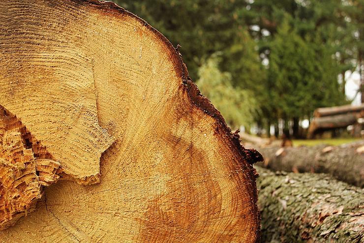 Lutte contre la déforestation : Greenpeace poursuivie par des multinationales