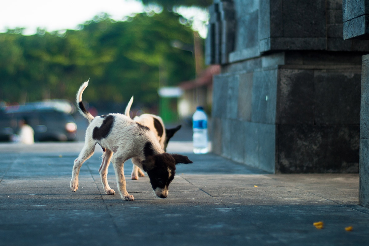 The Bali dog-meat trade: questioning our own habits