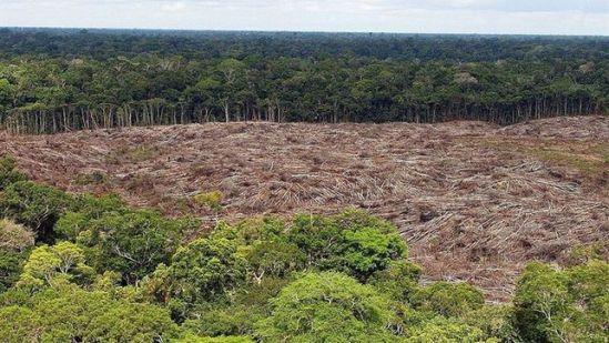 Los narcos blanquean su dinero deforestando los bosques de Centroamérica