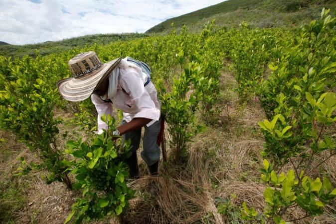 Colombia, la coca intralcia i negoziati di pace
