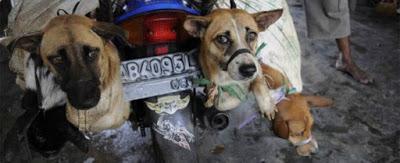Picchiati e bruciati vivi, fermiamo la strage dei cani dei market indonesiani
