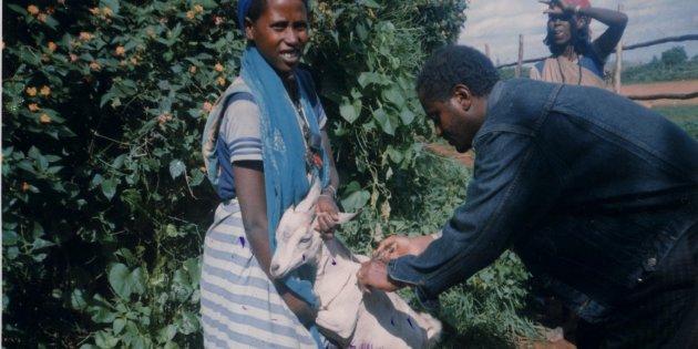In Etiopia la povertà si combatte affidando alle donne capofamiglia delle capre