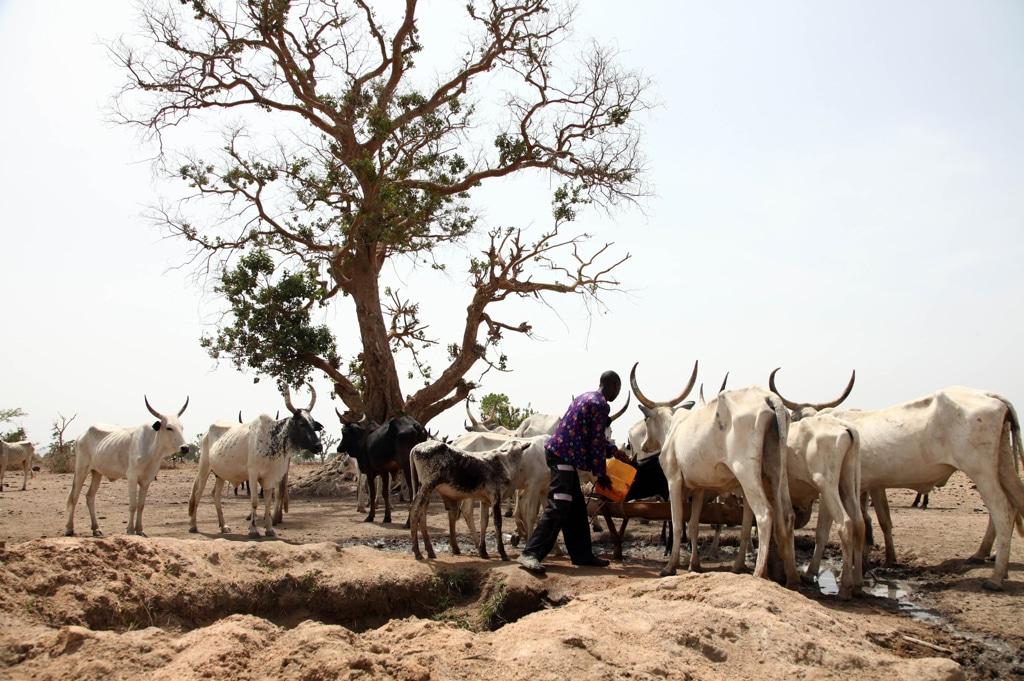 La crisi della Nigeria ha le radici nella terra