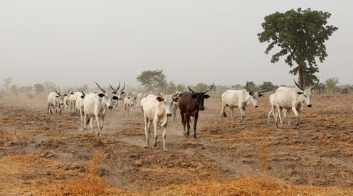 Au Nigeria, sous les conflits « ethniques », une crise environnementale sans précédent