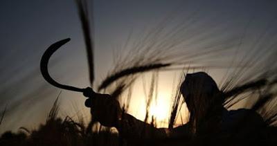 Les agriculteurs palestiniens pris entre le marteau israélien et l'enclume de l'Autorité palestinienne