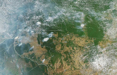 Brésil : la politique de la jungle brûlée  Bolsonaro contre l'Amazonie