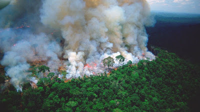 Amazon fires: how could this be happening on such a large scale? Who is behind it?