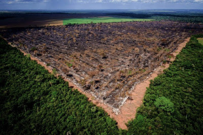 Amazonie : les incendiaires crient au feu